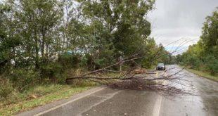 L'albero caduto oggi sulla Porto Clementino