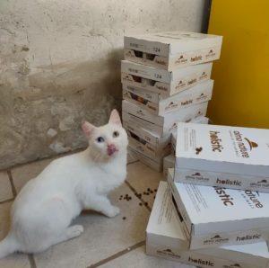 Una fornitura di prodotti Almo Nature per i gatti di strada di Tarquinia